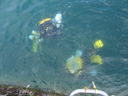Plongée lac du Bourget pierre à Bise