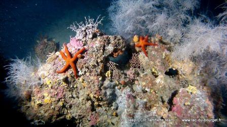 Plongée sur la Dorsale et son corail noir à Cavalaire