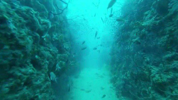 Plongée couloir aux gorgones le Grand Congloué à Marseille (c) Google