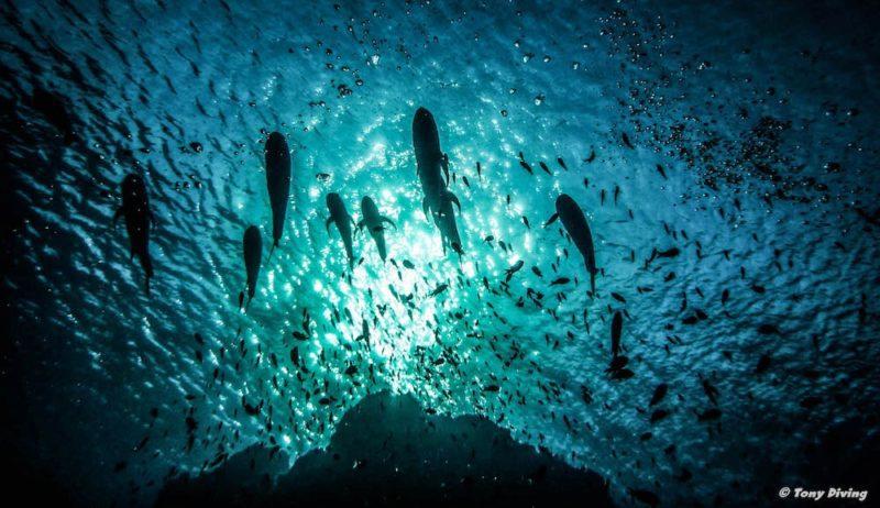 7 sites de plongée inoubliables en Asie (c) Tony Diving