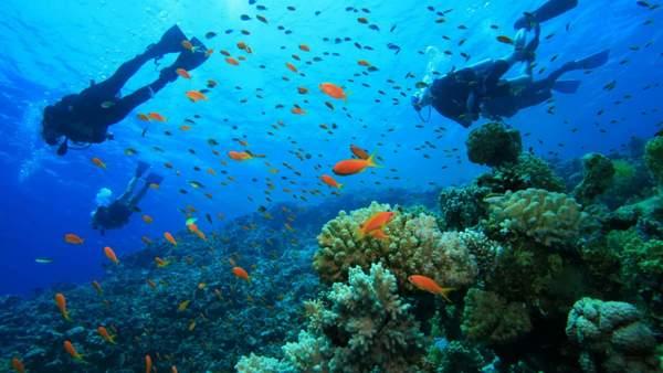 L'essentiel à retenir avant de faire de la plongée en Corse